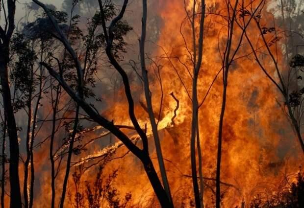 Метеорологи заявили о риске экстремальных погодных явлений в 2020 году