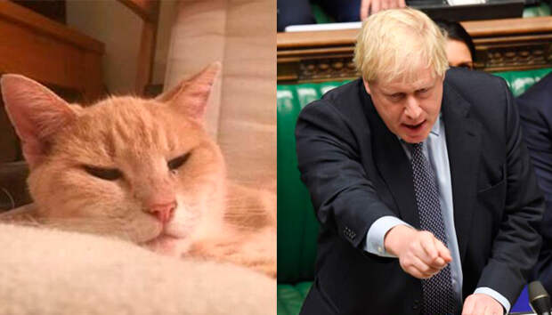 Кот баллотируется в парламент Великобритании