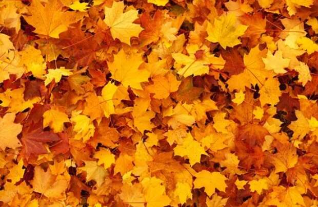 Гору опавшей листвы убрали со двора на Седова