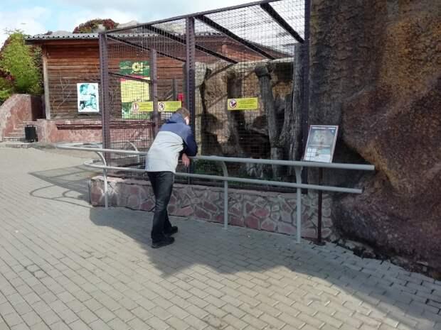 Защита от посетителей: в зоопарке Удмуртии перестали экспонировать песцов