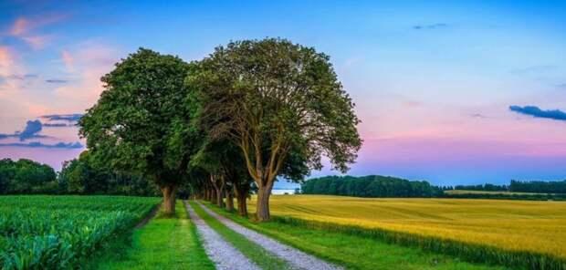Уединение с природой уменьшает стресс