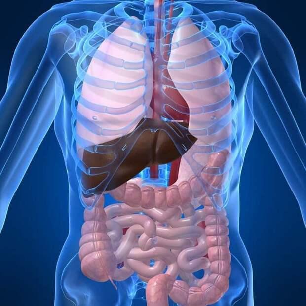 Чем опасны канцерогены и где они содержатся