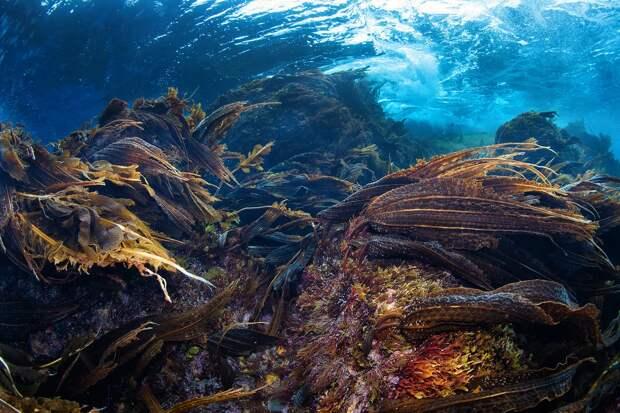 Подводный мир острова Монерон. Фото взято из открытых источников