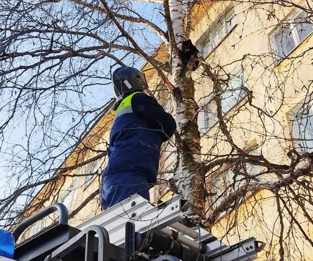 Спасатели сняли кошку с дерева