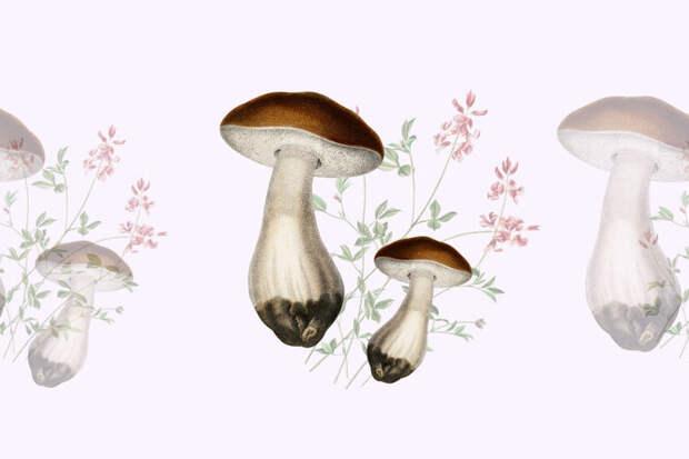 Как выглядят грибы съедобные и несъедобные? Шпаргалка для новичков