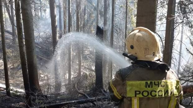 В Удмуртии прокуратура проверила парк «Нечкинский», где в результате пожара пострадало 55 га леса