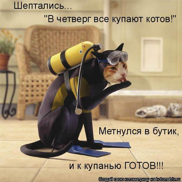 kotomatritsa_NK (700x699, 284Kb)