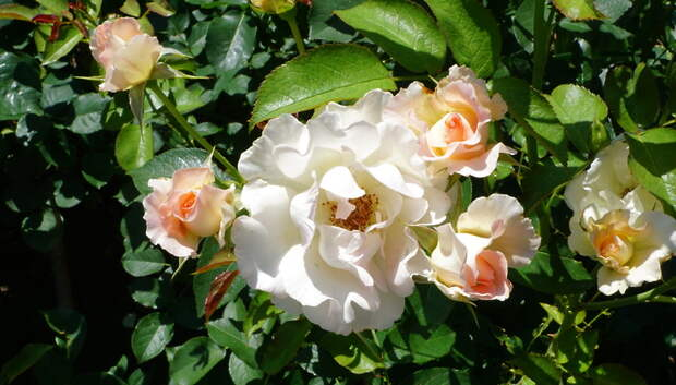 Цветы высадили во дворе микрорайона Кузнечики