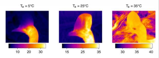 Разгадка найдена: ученые, наконец-то, поняли, зачем казуарам шлем на голове