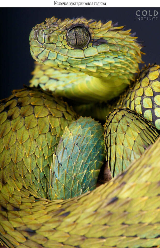 22 фото наиболее ярких и опасных созданий нашей планеты