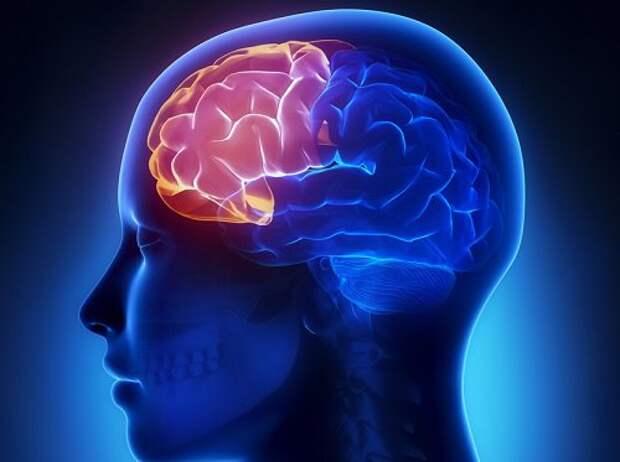 Память и ясность мышления