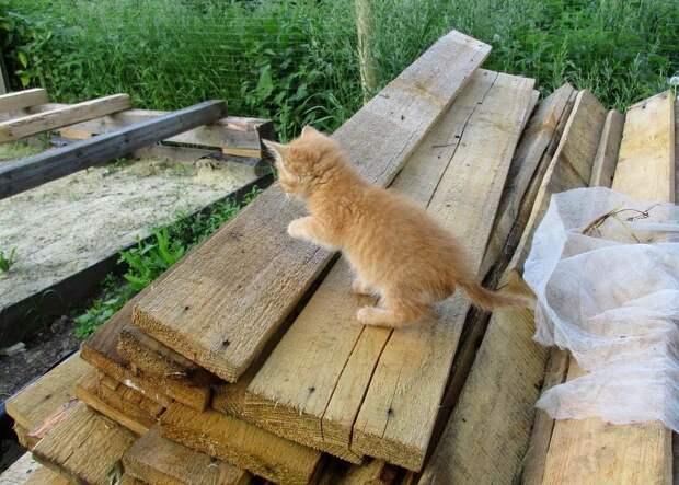 Любопытство сильнее боязни