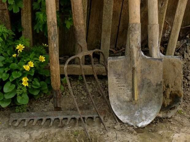 Обработка марганцовкой садового инвентаря