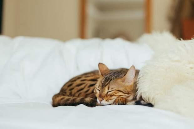 Как узнать, скем будет спать кошка
