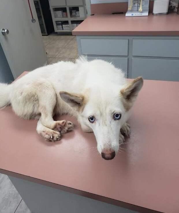 Собачку нашли в клетке у дороги, открыв ее, люди не поверили, что у нее могут быть такие лапы