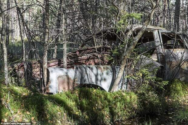 Прогнивший остов машины на бывшей территории свалки стал частью шведского леса