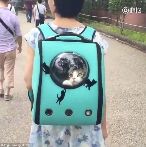 4. Забавные фотографии, домашние животные, животные прикол, кошки, переноска, собака в сумке, собаки, фото собак