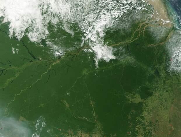 Палеонтологи выяснили, как появились леса Амазонии