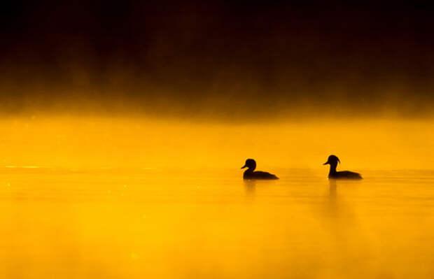 Удивительно искренние отношения животных и птиц в 10 фотографиях