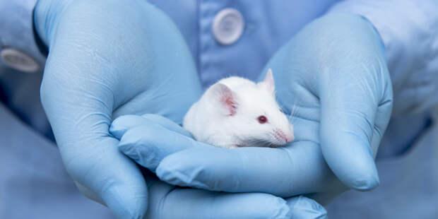 Мыши помогли ученым раскрыть механизм возникновения любопытства