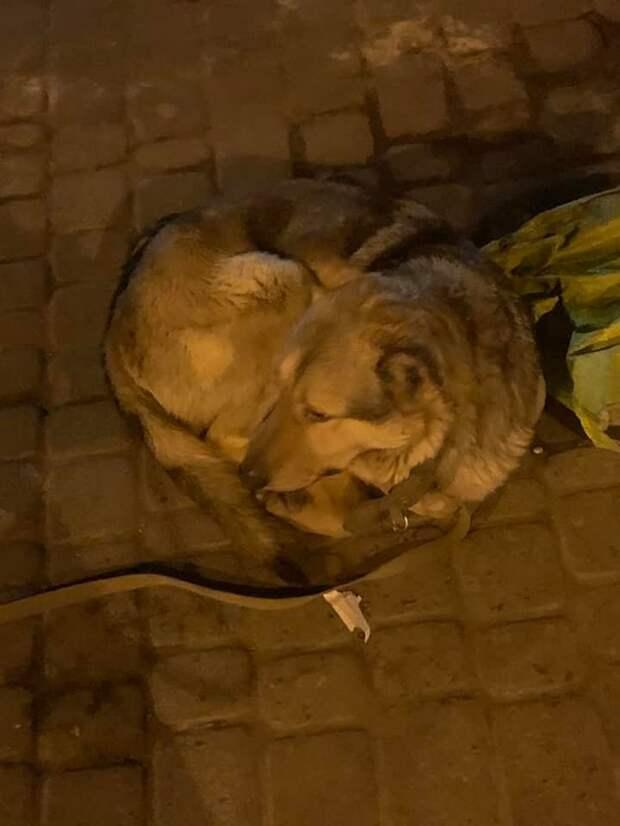 Пес всю ночь охранял вещи хозяина, которого забрала скорая
