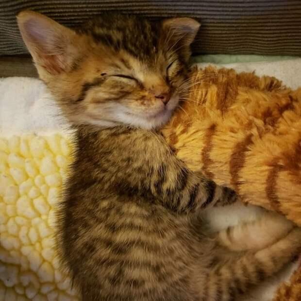 Котенок спит