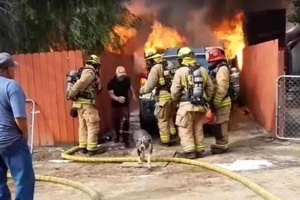 Отец бросился в пылающий дом, чтобы спасти собаку — любимицу его семьи