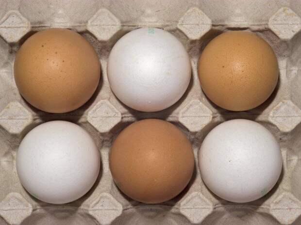 Рост цен на яйца и мясо птицы в России проверят