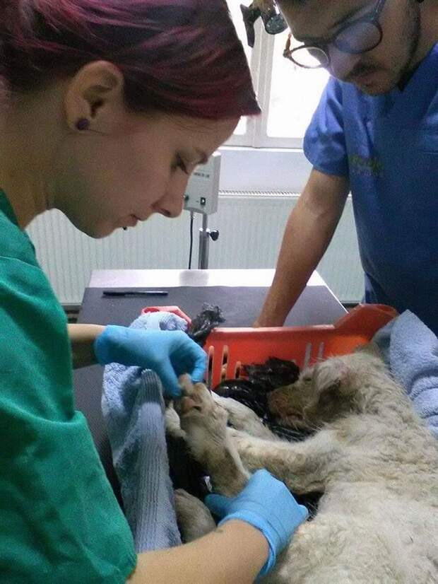 Избитого щенка завязали в полиэтилен и выкинули умирать, но его нашли и выходили добрые люди собак бросают нелюди, собаки лучше людей