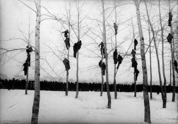 Болельщики забрались на деревья, чтобы увидеть футбольный матч между Бельгией и Голландией, 1913 год.
