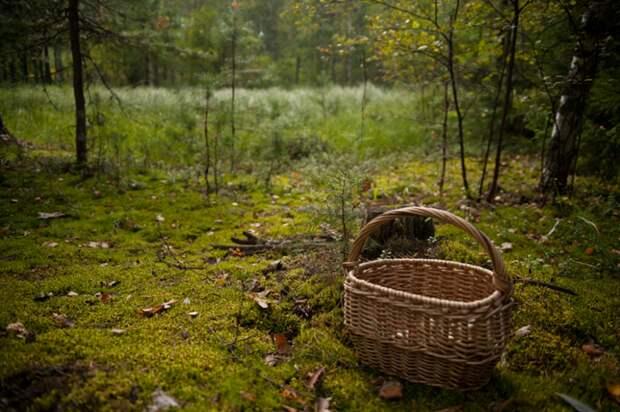 Специалисты столичного Департамента ГОЧСиПБ советуют: как не потеряться в лесу