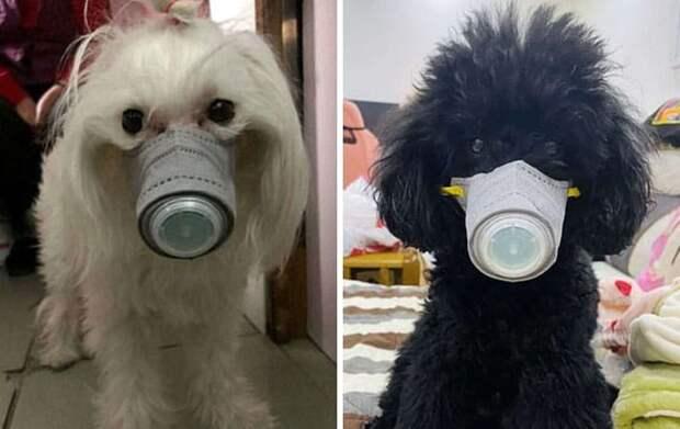 собаки в масках