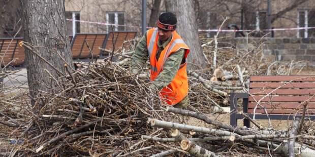 Дерево во дворе на Зеленодольской безопасно — Жилищник