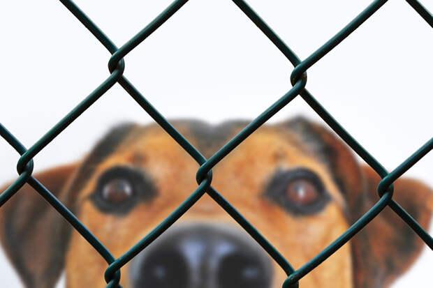 IKEA поможет собакам и кошкам из российских приютов обрести хозяев