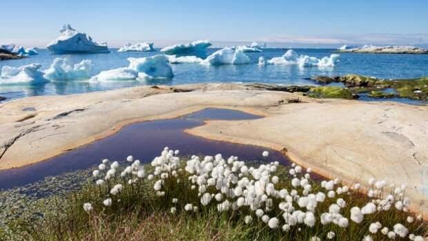 Глобальный мир заклиматило: об акциях в защиту окружающей среды