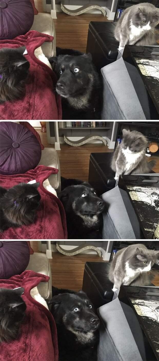 2. По-прежнему не может привыкнуть к семейству кошачьих животные, жизнь, кот, питомец, семья, собака, фото