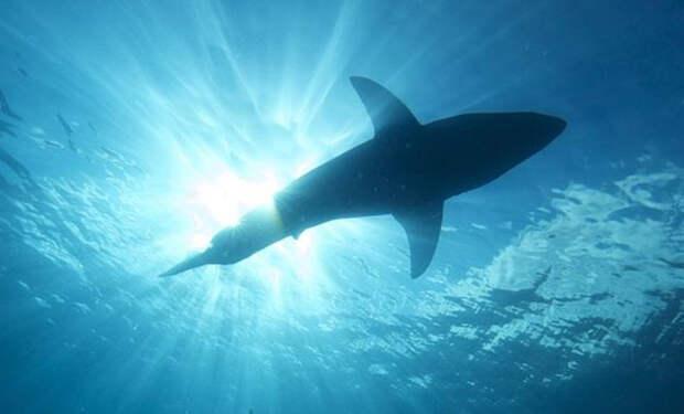 Рыба поднялась с глубины и утащила акулу на глазах рыбаков