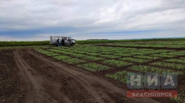 Дроны и спутники помогают красноярским ученым прогнозировать пожары и урожайность