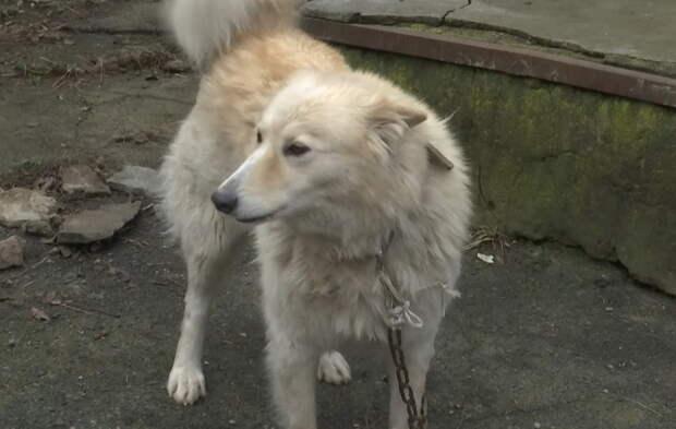 Люди спасли собаку, которая на дороге ждала своего хозяина, от голодной смерти