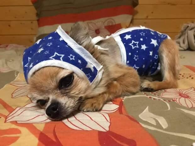 Кошки и собаки болеют коронавирусом