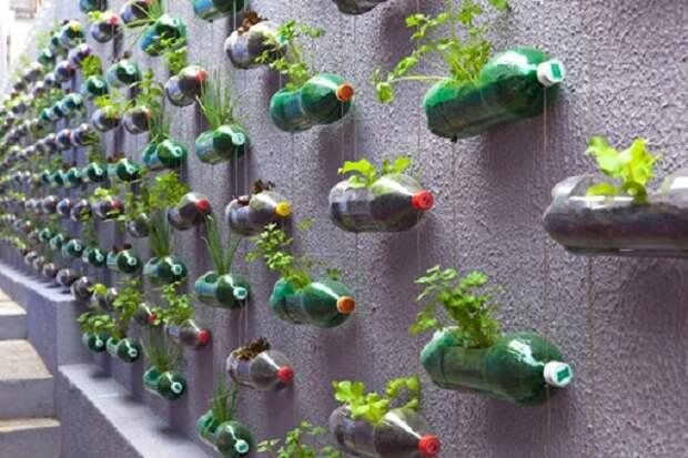 Креативный подход к обустройству дома. Сад в бутылке