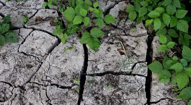 «Мертвый уровень»: крымские водохранилища и реки зарастают травой