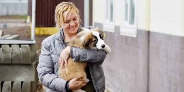 Собянин рассказал о возобновлении работы волонтеров в приютах для животных. Фото: mos.ru