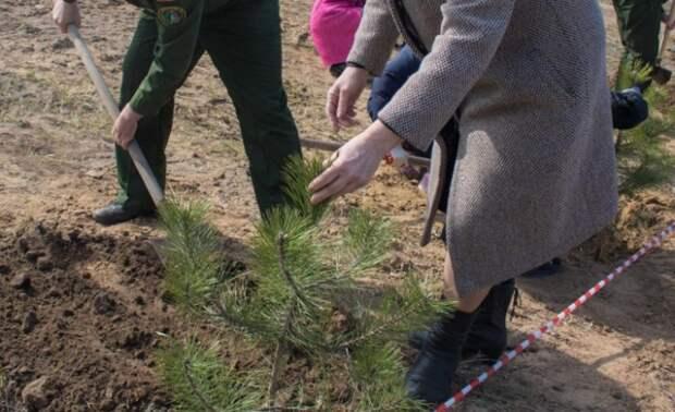 Будетли вокруг Ростова зеленый пояс, икогда онпоявится