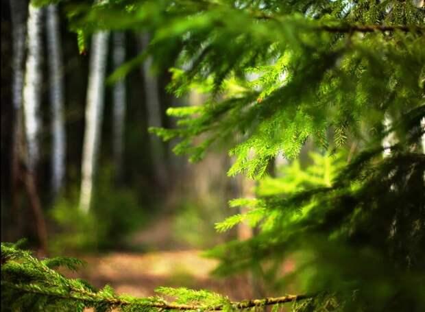 Плутали по лесу, вдруг видим - под ёлкой сидит мужичок, совсем старенький, и в лаптях