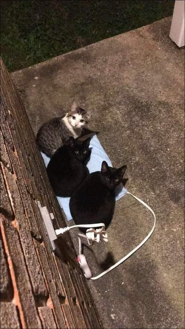 Кошки, такие кошки