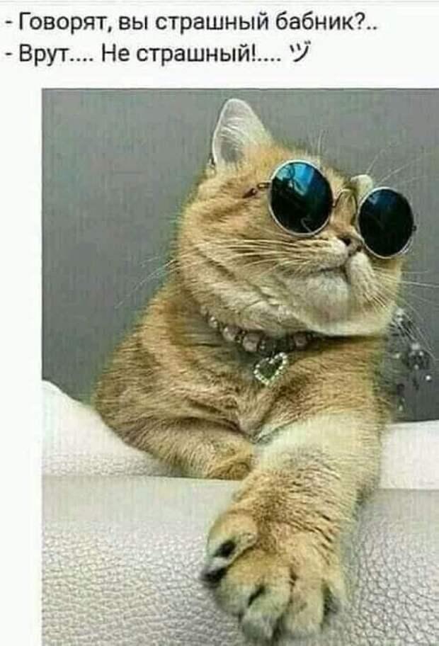 Возможно, это изображение (кот и текст «говорят, вы страшный бабник?.. врут.... He страшный!....»)