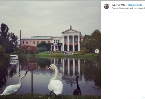 Фото дня: лебедь из Ботанического сада пытался оторвать табличку