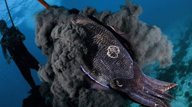 10 невероятных подводных созданий, чьи способности не поддаются объяснению