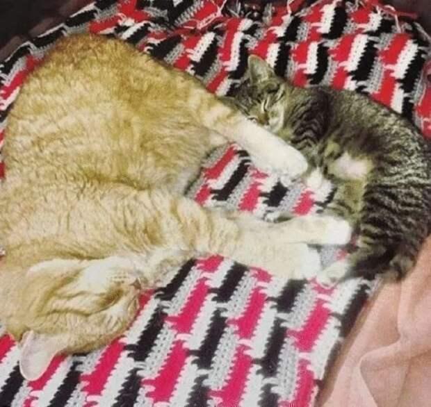 Усатый «медбрат»: больной рыжий кот стал сотрудником ветеринарной клиники